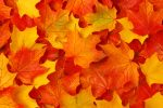 bigstock-Fall-leaves-14340998